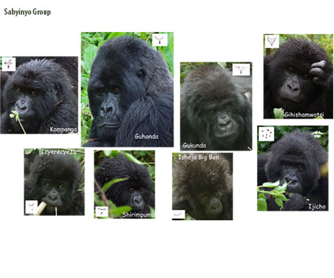 Sabyinyo gorilla group
